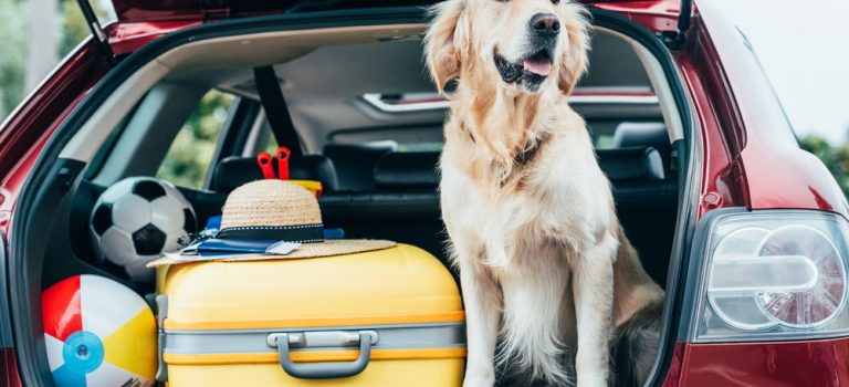Chystáte se na cestu se zvířaty? Měli byste vědět, že potřebují pas i pojištění