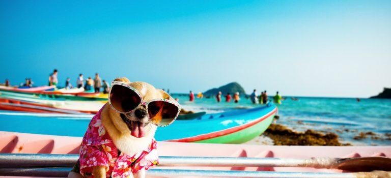 Kde najdete nejlepší psí pláže? V Itálii a v Chorvatsku! Nabízí i psí lehátka a sprchy