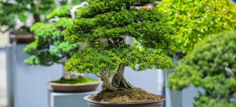 Kroměříž láká na výstavu vzácných bonsají z celého světa