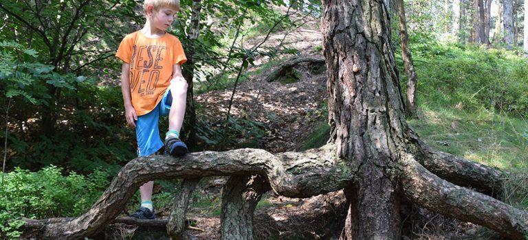 Les dětem prospívá víc, než jste možná tušili