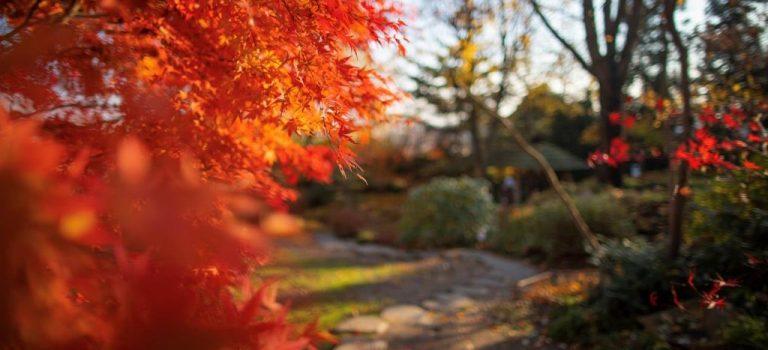 Trojská botanická zahrada je i nadále pro veřejnost otevřená
